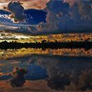 Wild Florida by LudaNayvelt