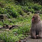Forlorn Monkey on a Summer's Day by britbird