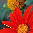 Bloom by Rhys Herbert