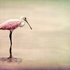 Spoonbill on a Grunge Background by Rosalie Scanlon