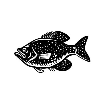 Crappie Fish Woodcut by patrimonio