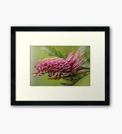Spring to Life Framed Print
