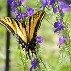 Swallowtail in the Delphiniums by annAHorton