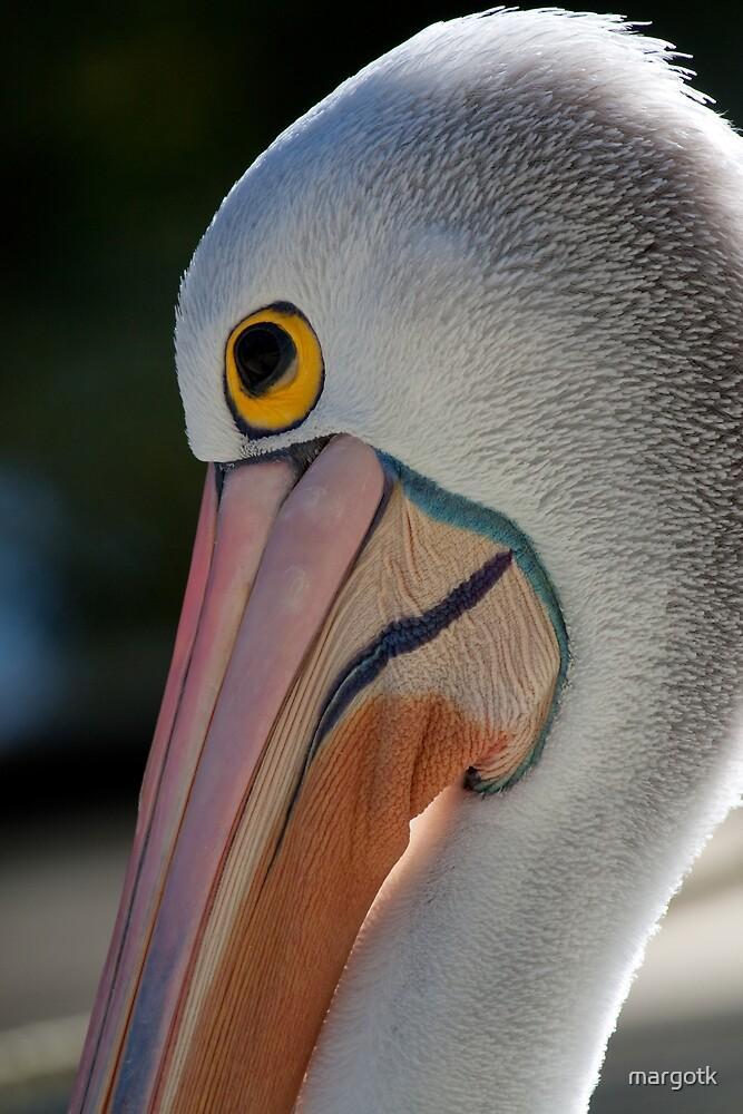 Pelican by margotk