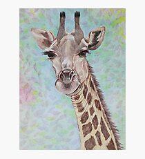 African Giraffe Photographic Print