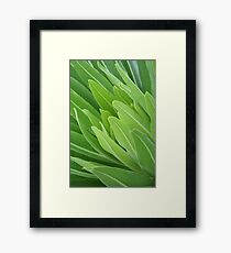Leaf closeup Framed Print