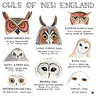 Owls of New England by Evvie Marin