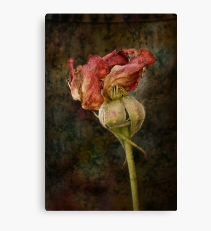 Rust n Roses ~ #13 Canvas Print