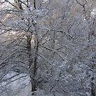 Winter Beauty by Jaclyn Hughes