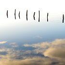 Wetlands by blueeyesjus