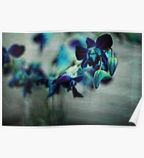 Textured Orchids Poster