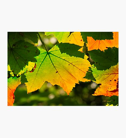 Color of Autumn Photographic Print