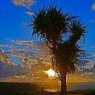 Palme Sonnenuntergang von brimel55