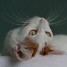 Lotus's Whiskers by nekineko
