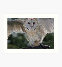 Barn Owl spread Art Print