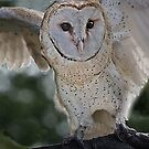 Barn Owl spread by Nancy Richard
