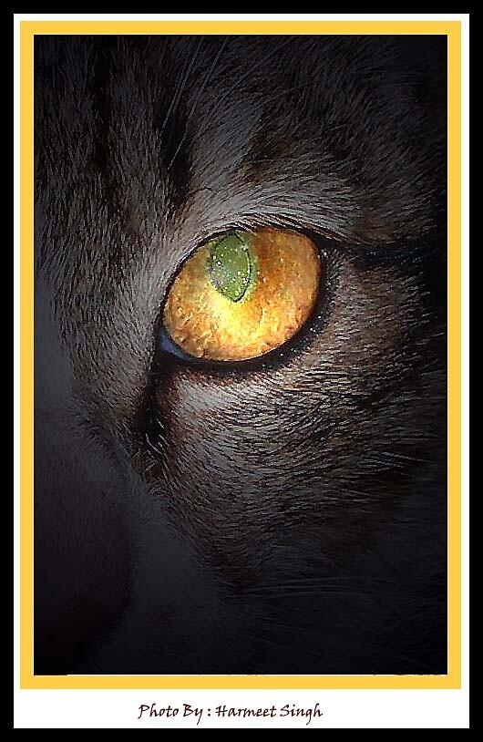 Golden Eye by Dr. Harmeet Singh