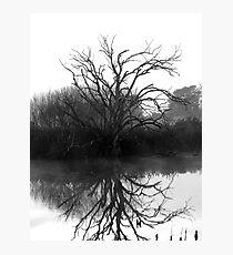 """Blackstone Tree"" B@W Photographic Print"