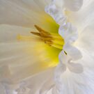 A Flower for Eleanor by Adam Bykowski