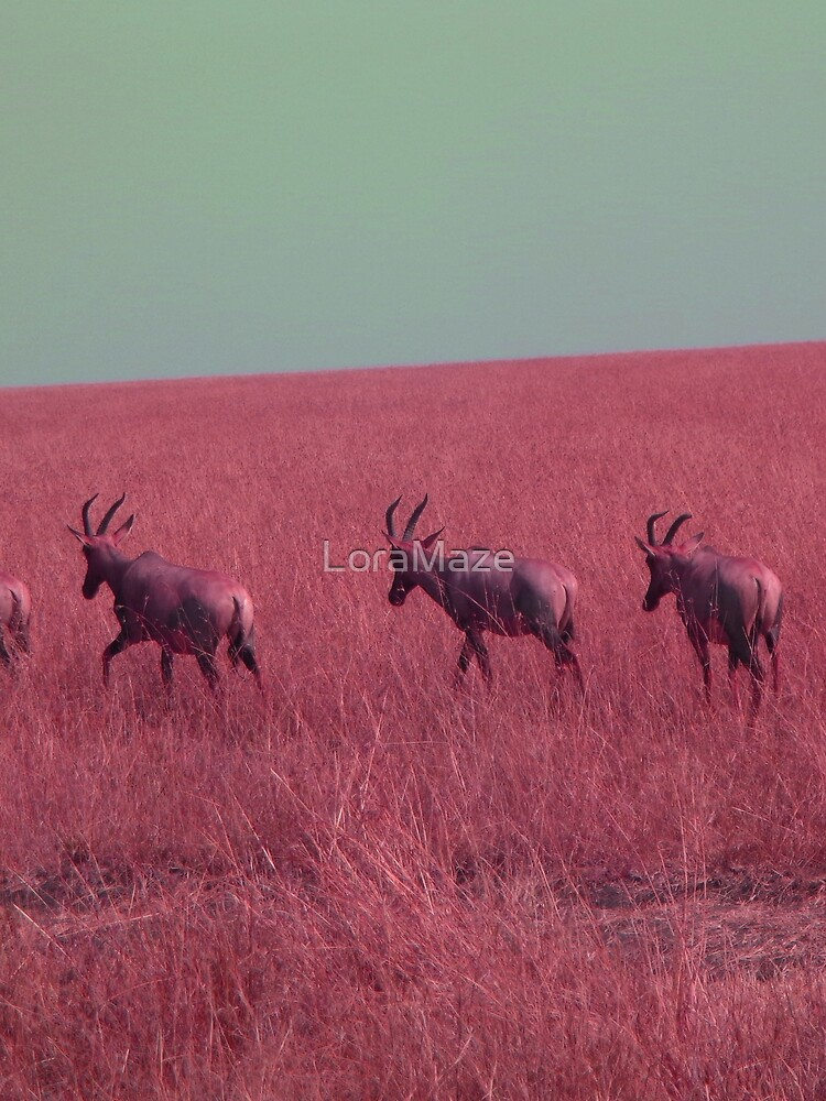 Hartebeest in Red by LoraMaze