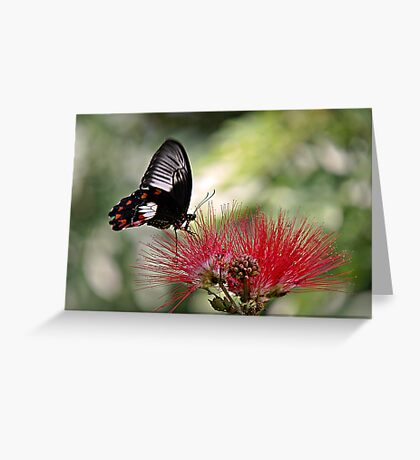 Dinnertime - swallowtail butterfly Greeting Card