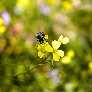 Bee on a flower by petrosdeme