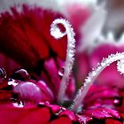 Beauteous by loramae