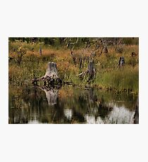 St. Andrew State Park Photographic Print