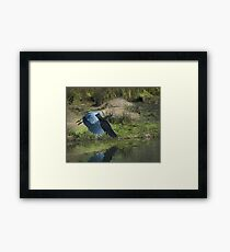 Great Blue Heron In The Salt Marsh Framed Print