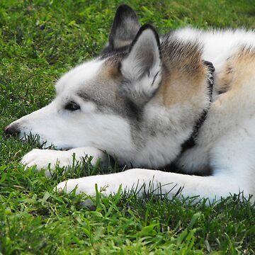 A dog's life... by flashphotogz