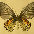 Butterfly-Troides by Pete Janes