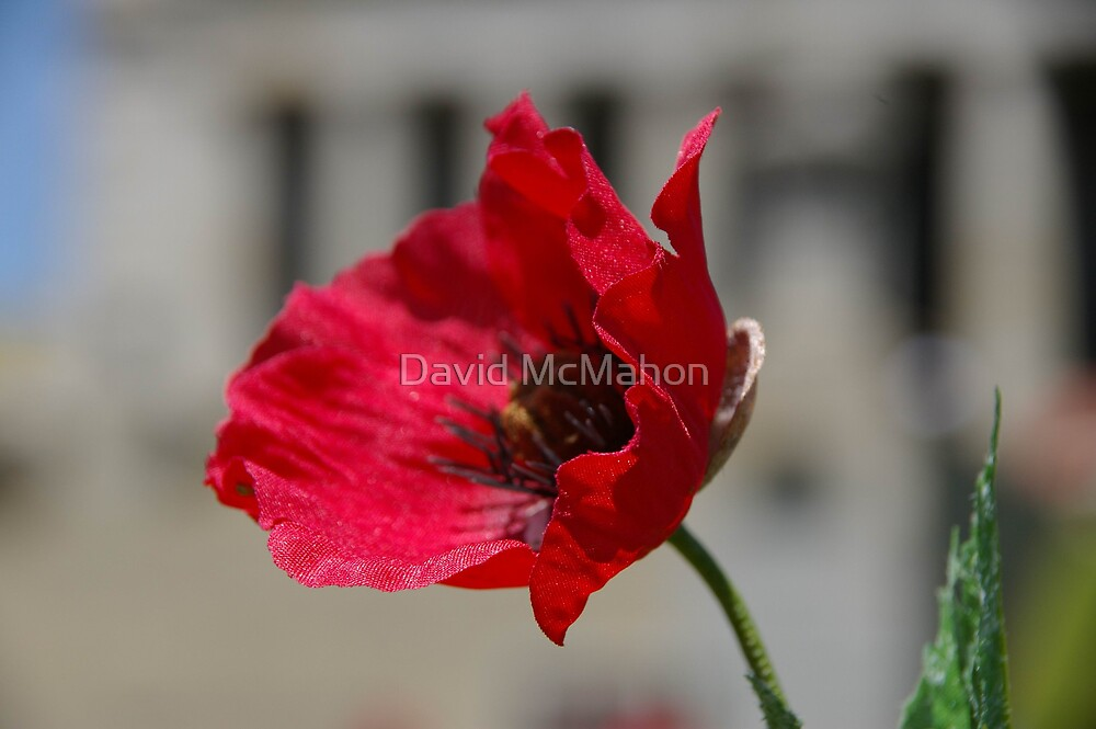 Lest We Forget by David McMahon