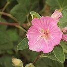 Pretty in pink by supernan