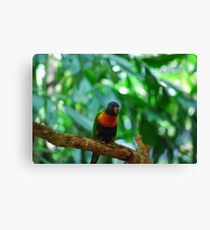 Tropical Color Canvas Print