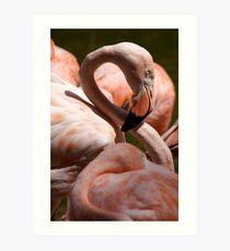 San Diego Flamingo Art Print