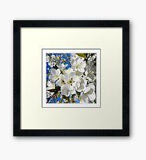 Quelques fleurs de cerisier... Framed Print