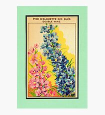Vintage French Seed Packet Photographic Print