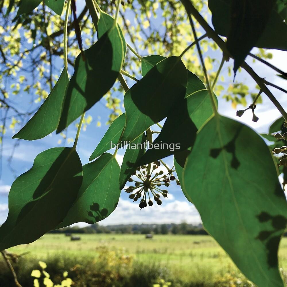ivy seed head amongst green leaves by brilliantbeings