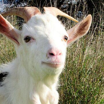 Goat Portrait by taiche