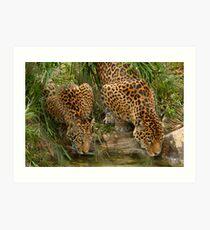 pair of Jaguars Art Print