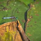 Dragonfly by Mike Edge