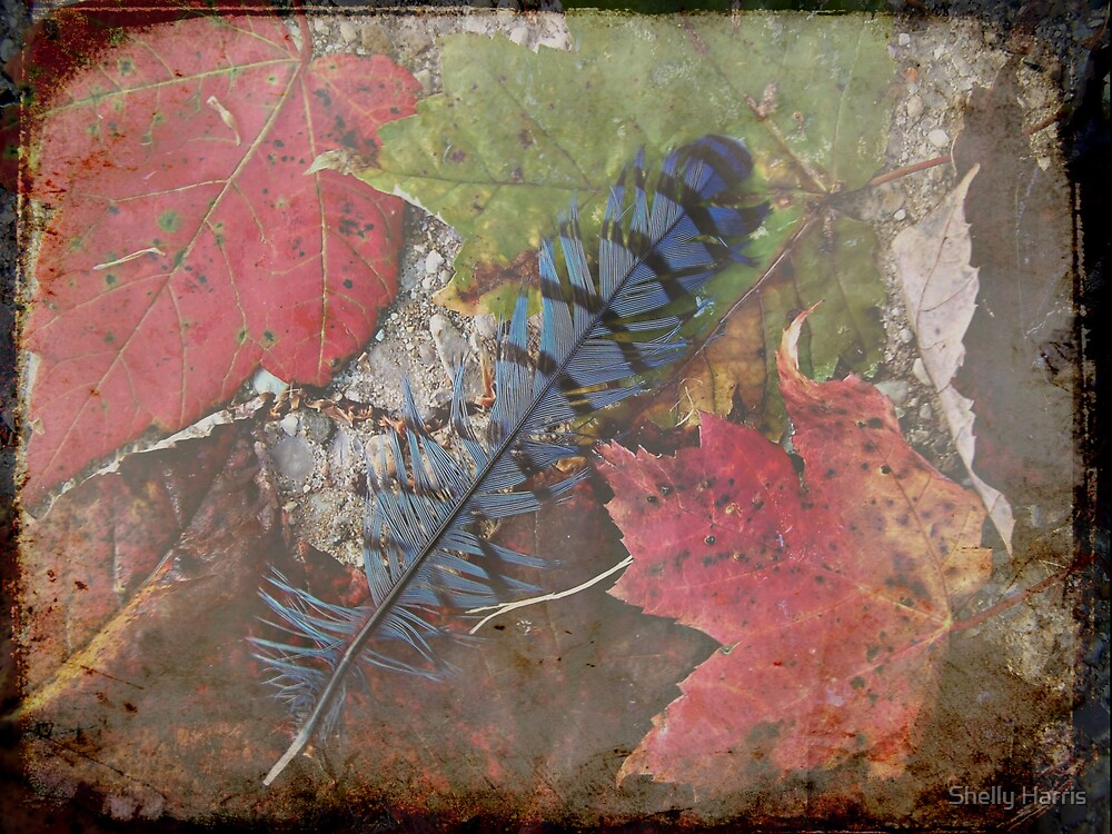 Shedding Old Notions by Shelly Harris