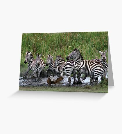 Zebras and Hamerkop Greeting Card