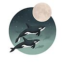 moonlight caravan // orcas by lauragraves