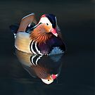 Mandarin Duck by Richard Garvey-Williams