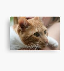 Close up wiskers  Metal Print