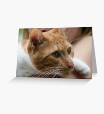 Close up wiskers  Greeting Card