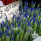 Irises for Sale by Whitney Edwards