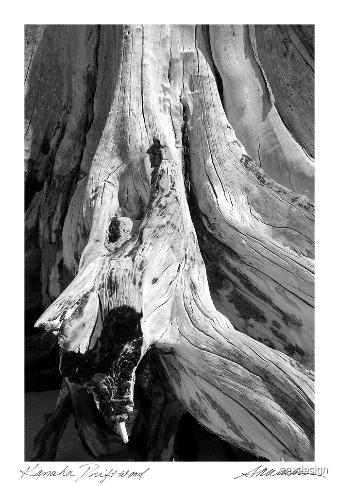 Kanaha Driftwood by Susan R. Wacker