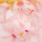 pink petals abstract macro by faithie